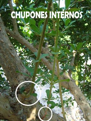 chupones