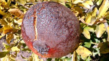 granada-soleada